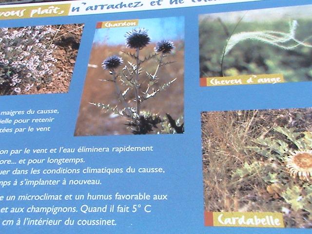 Un petit tour en Gironde Dsc05613