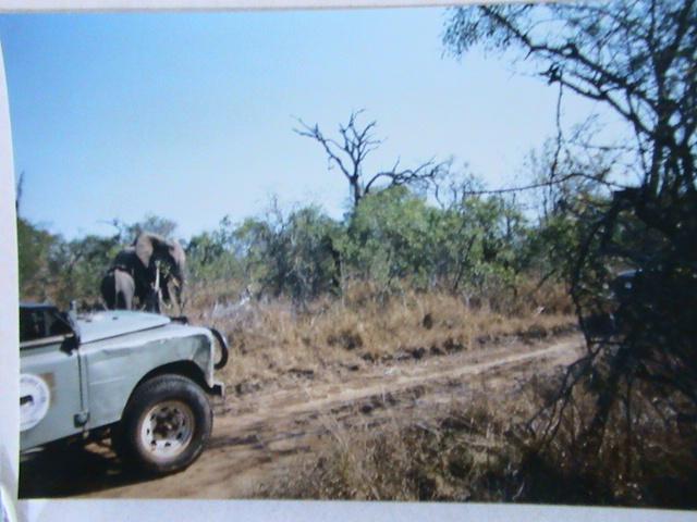 Afrique du Sud Dsc05717