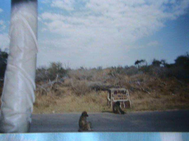 Afrique du Sud Dsc05719
