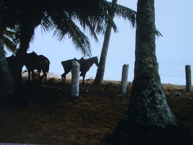 La République Dominicaine Dsc05745
