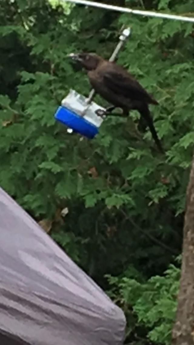 Je cherche le nom de cet oiseau  Img_4010