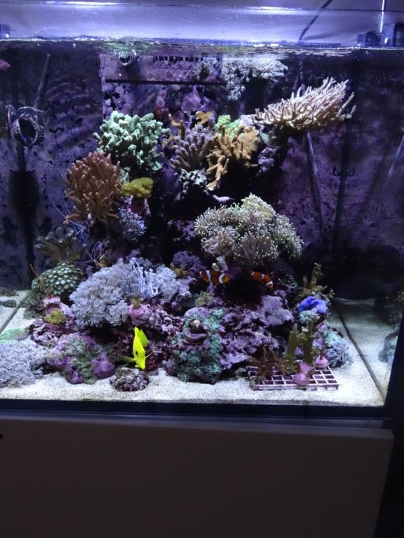 Mon petit bout de récif Dsc06510