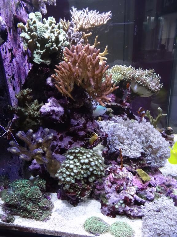 Mon petit bout de récif Dsc06513
