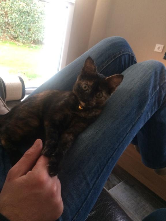 OSIA, femelle tricolore, type chat de maison, née le 1/08/2018 Img_1513