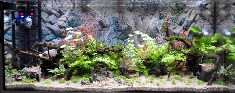 Projet aquarium 180 L - Page 2 Dsc_0010