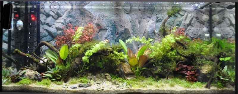 Projet aquarium 180 L - Page 2 Dsc_0022