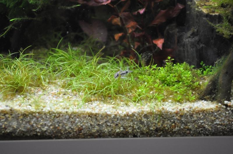 Projet aquarium 180 L - Page 2 Dsc_0027