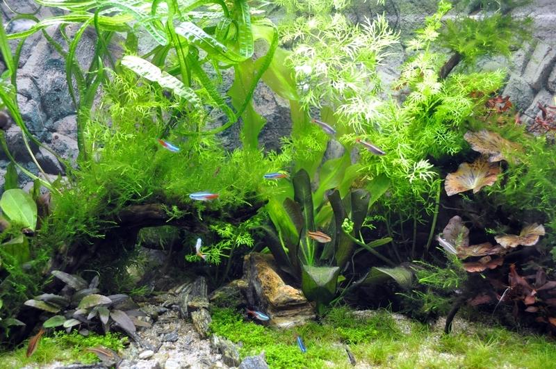 Projet aquarium 180 L - Page 2 Dsc_0038
