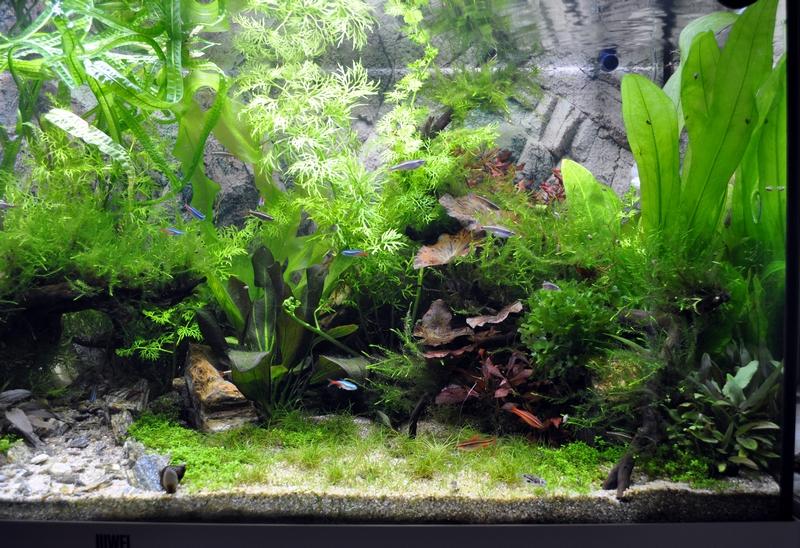 Projet aquarium 180 L - Page 2 Dsc_0039