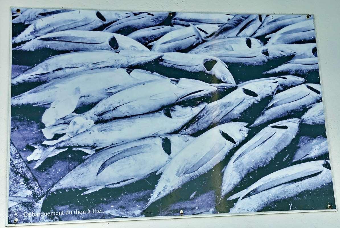 [Vie des ports] Etel d'aujourd'hui et son histoire de la pêche au thon Dsc06050
