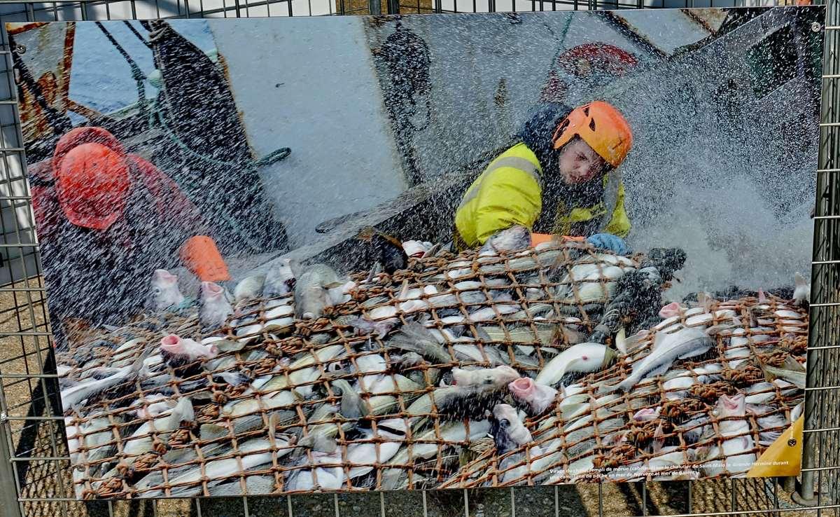[Vie des ports] Etel d'aujourd'hui et son histoire de la pêche au thon Dsc06081