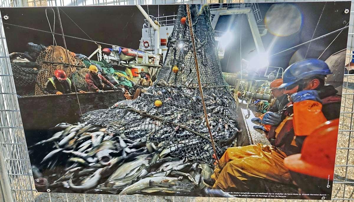 [Vie des ports] Etel d'aujourd'hui et son histoire de la pêche au thon Dsc06082