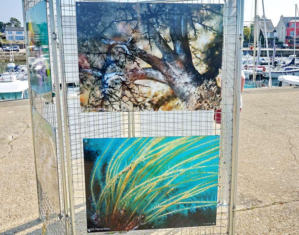 [Vie des ports] Etel d'aujourd'hui et son histoire de la pêche au thon Dsc06151