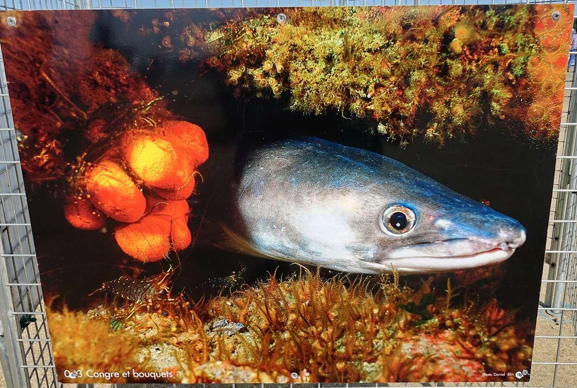 [Vie des ports] Etel d'aujourd'hui et son histoire de la pêche au thon Dsc06174
