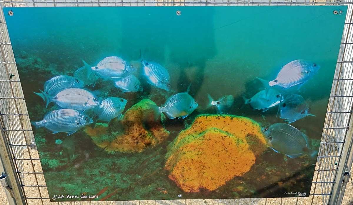 [Vie des ports] Etel d'aujourd'hui et son histoire de la pêche au thon Dsc06176