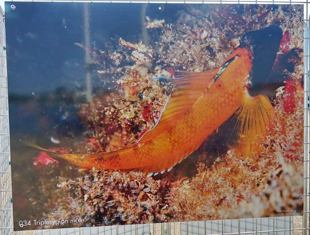 [Vie des ports] Etel d'aujourd'hui et son histoire de la pêche au thon Dsc06180