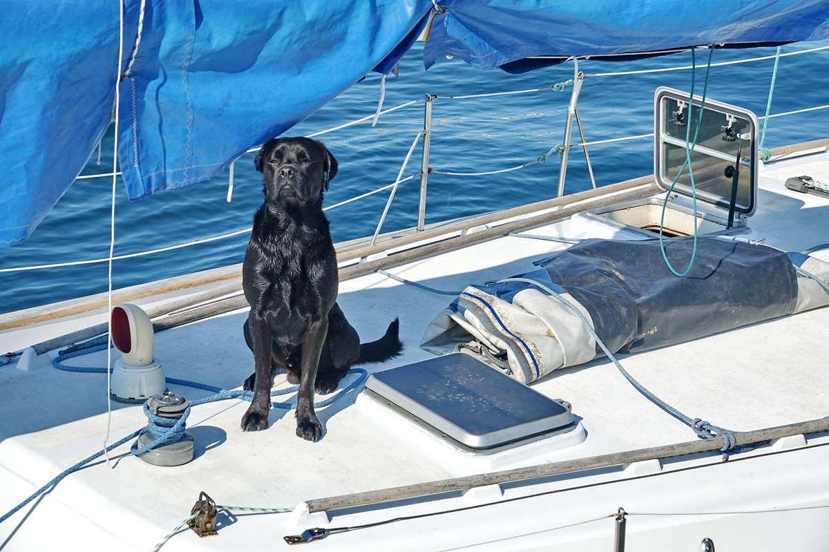 [Vie des ports] Etel d'aujourd'hui et son histoire de la pêche au thon Dsc06181