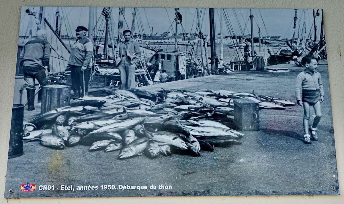[Vie des ports] Etel d'aujourd'hui et son histoire de la pêche au thon - Page 3 Dsc09993