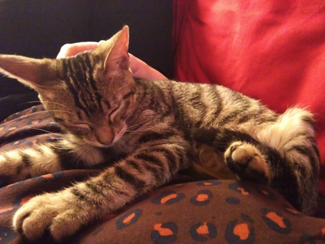 lince - LINCE (PIRATE 4 adopté) Img_2015