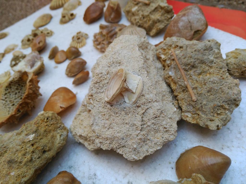 Ayuda identificación corales. Img_2011
