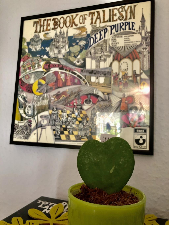 Brilonas bescheidene Hoya-Sammlung Img_8513