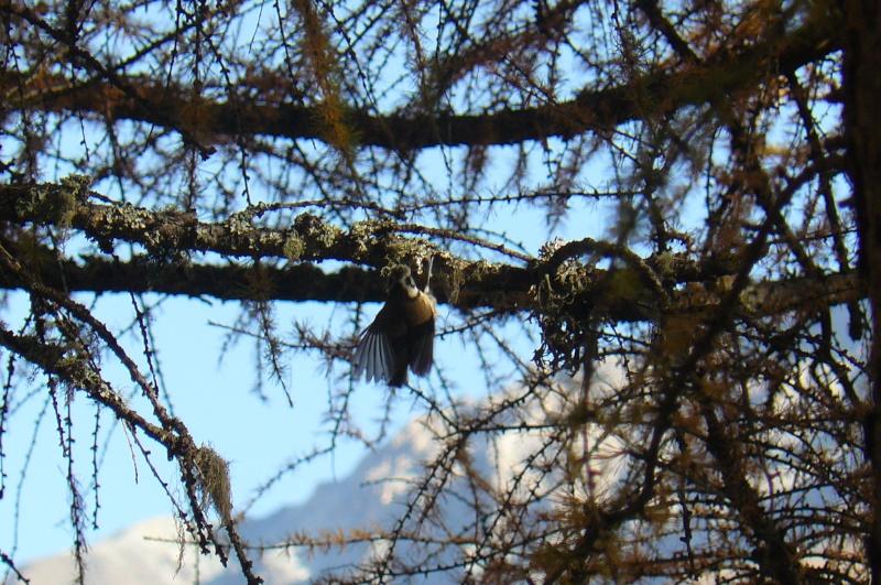 Photos d'oiseaux! P1020620