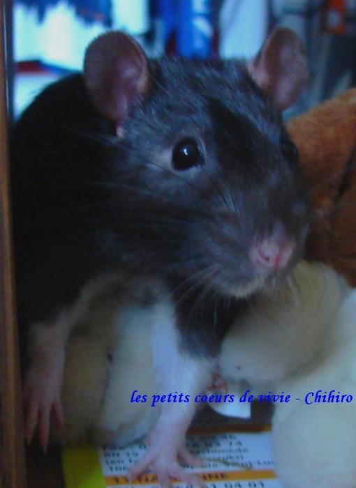 mes ptis coeurs les voilou Chihir10