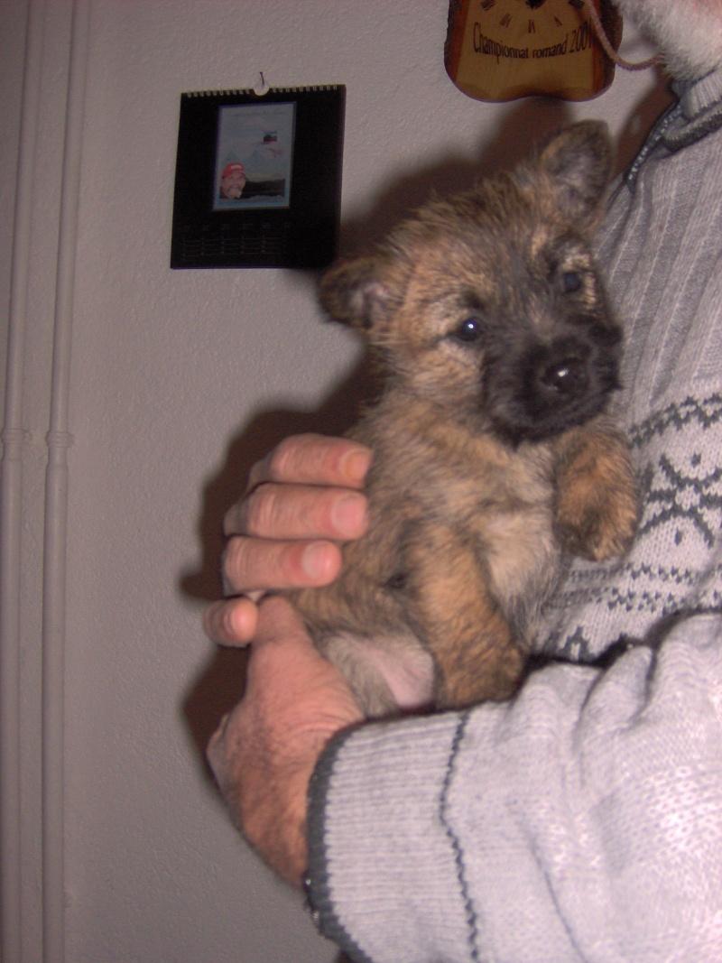 Alinka    cairn terrier Janvie10