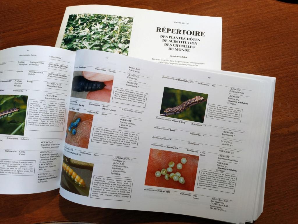 Répertoire des plantes-hôtes de substitution des chenilles du monde  Rpscm-14