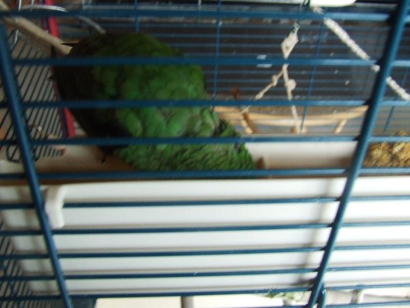 Mon oiseau a un grave problème Photo123
