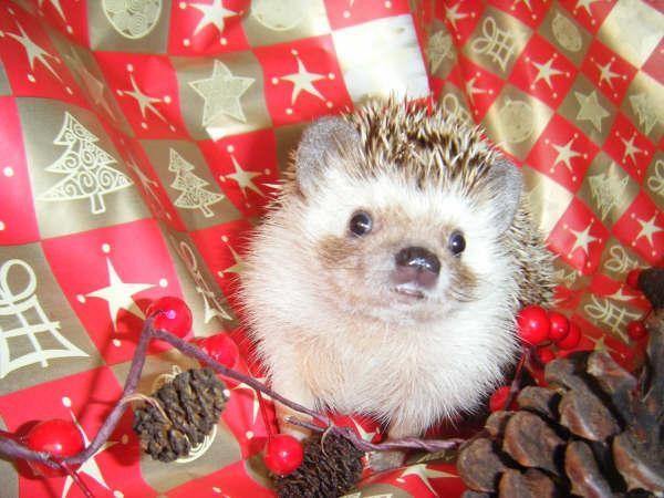 Concours photos Noël 2008 1010