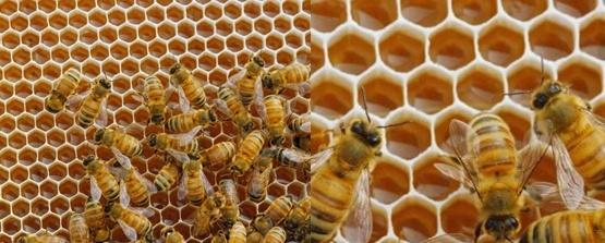 LA FRANCMASONERIA - Página 18 Bees11