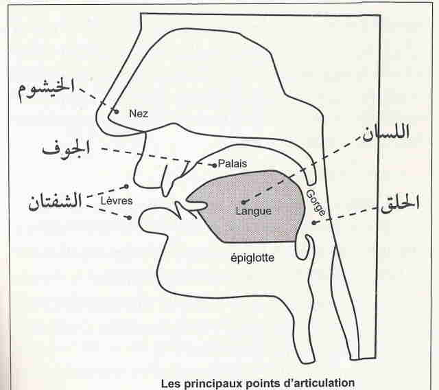 Les points d'articulations des lettres (makharij al-huruf) Points10