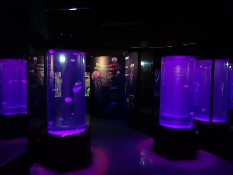 [Centre Commercial] Aquarium Sea Life Paris Val d'Europe (2001) Dsc01911