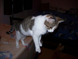 A adopter chatonne d'environ 4 mois 100_1725