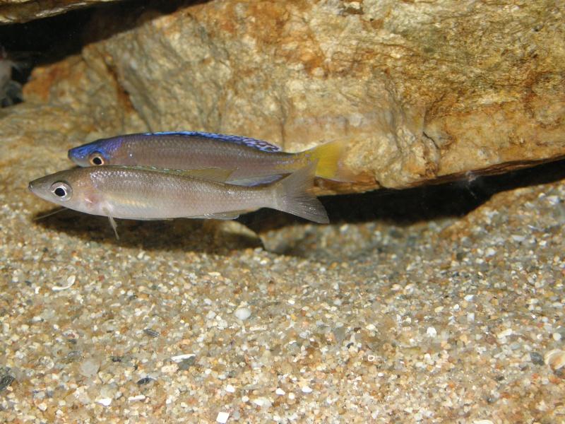 Aquarium 450 litres Tanganika - Mick85 P3039117