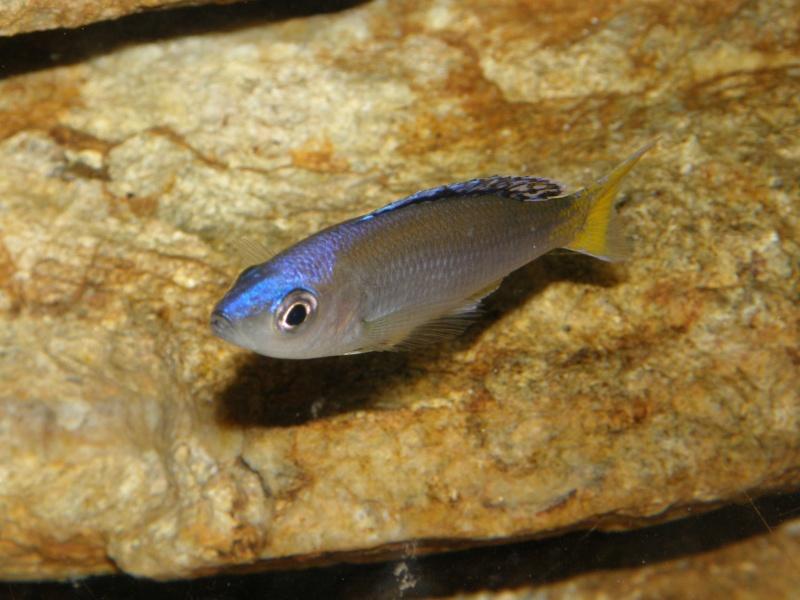 Aquarium 450 litres Tanganika - Mick85 P3039118