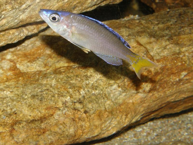 Aquarium 450 litres Tanganika - Mick85 P3039123