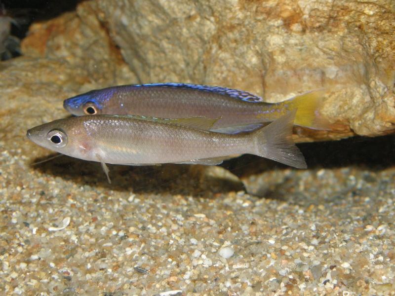 Aquarium 450 litres Tanganika - Mick85 P3039211
