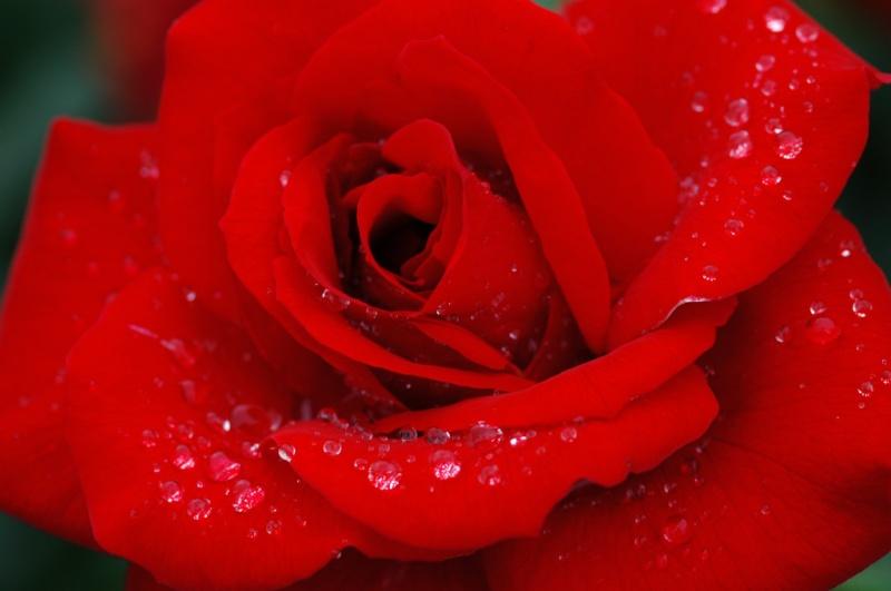 una canción para cada una de nos Flower10