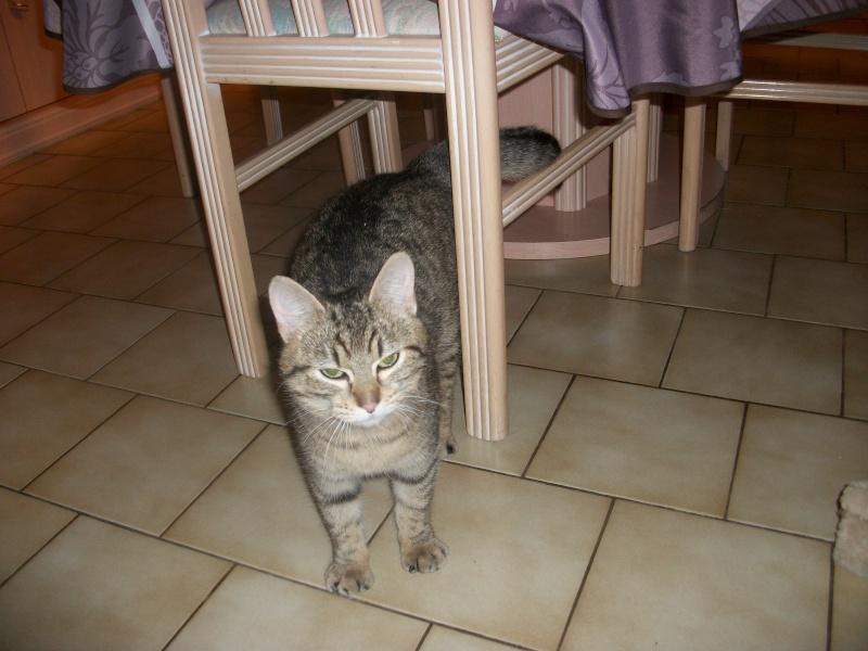 Ibiss chez Dizzie née juillet 2012 (adoption coup de pouce ) Imgp2823