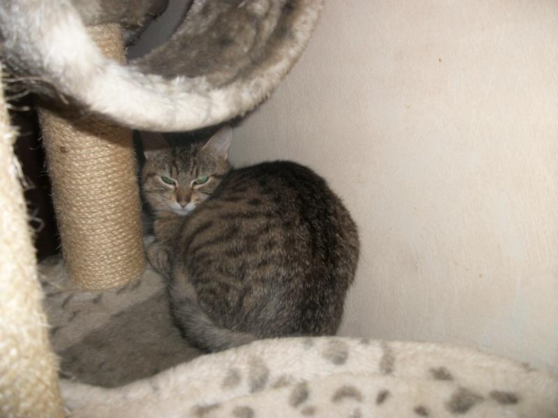 Ibiss chez Dizzie née juillet 2012 (adoption coup de pouce ) Imgp2843