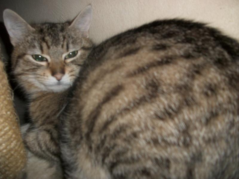 Ibiss chez Dizzie née juillet 2012 (adoption coup de pouce ) Imgp2844