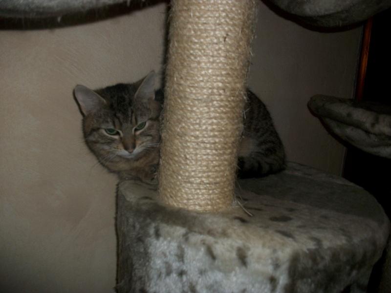 Ibiss chez Dizzie née juillet 2012 (adoption coup de pouce ) Imgp2913