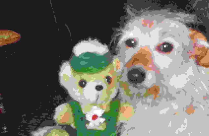 mes trois chiens Mimi10
