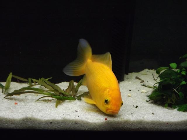 115 L poissons rouges 110