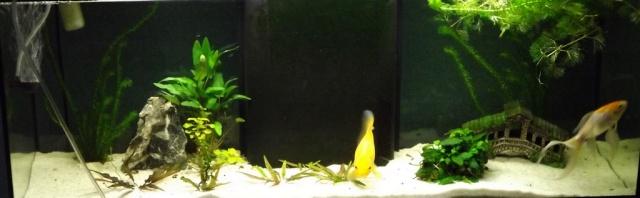 115 L poissons rouges 211