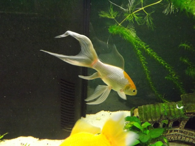 115 L poissons rouges 310