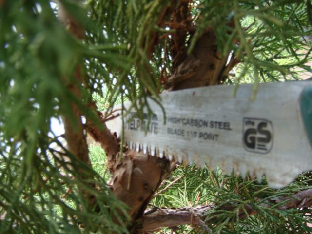 Herramientas para trabajos en bonsai Sierra10
