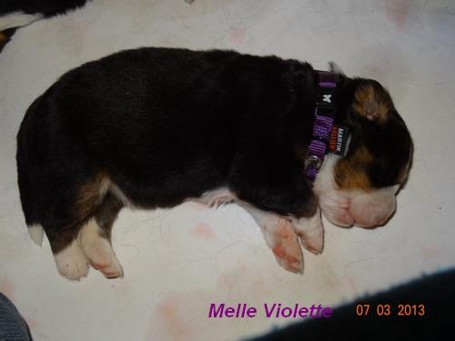 Bébés de Freyja Melle_13
